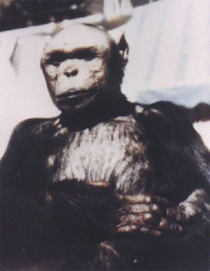 Oliver The Humanzee - YouTube
